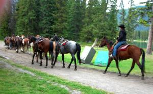 Banff trail horses going home