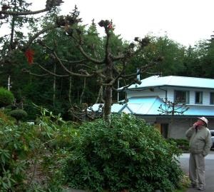 Spreading trees -- pruned severely