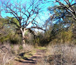 February 2010 - Road in the woods in Fort Clark, Texas