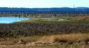 Minimal water at Toledo Bend, Louisiana