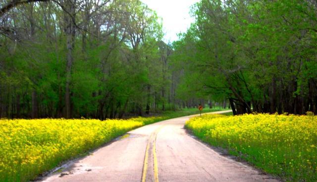 Hundreds of Miles of Roadside Flowers