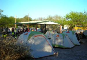 Like Mushrooms - 200 Tents