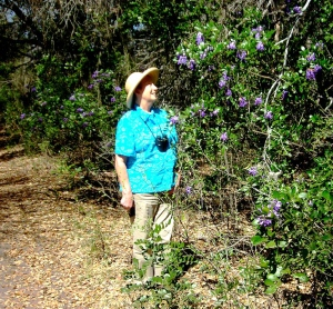 Mountain Laurel in Fort Clark