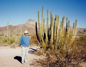 Organpipe Cactus near Ajo, Arizona