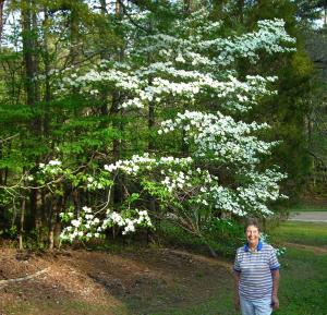 Dogwoods on the Natchez Trace, MS.
