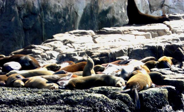 Very smelly sea lions at Cabo San Lucas, Mexico
