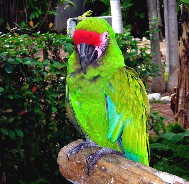 Seen one parrot, seen them all.  But this is a Puerto Vallarta parrot, and he thinks he is special.
